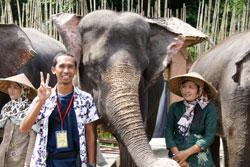 Gajah bali safari