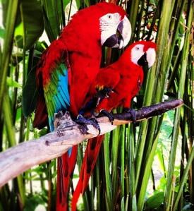 Bali Bird Park 3