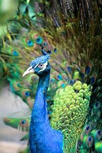 Bali Bird Park 2