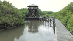 tower di mangrove