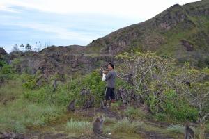 hutan kera di atas gunung Batur
