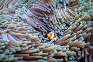 Finding nemo at Gili